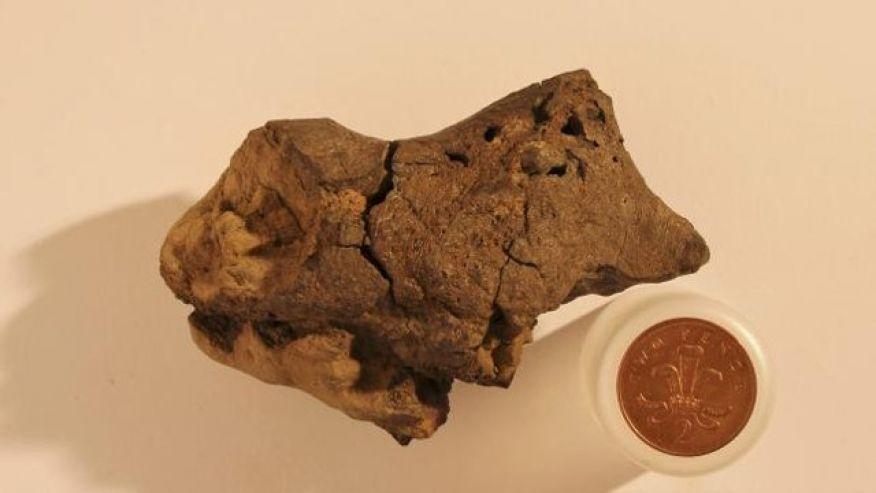 Ученые впервые обнаружили окаменелые ткани мозга динозавра