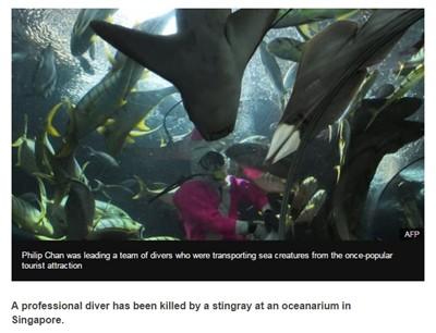В Сингапуре скат убил дайвера