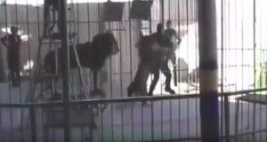 Лев загрыз укротителя