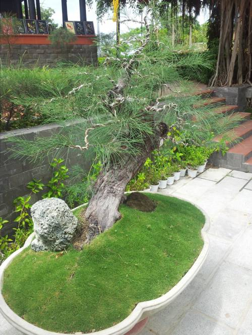 Эко-парк Янг Бей во Вьетнаме