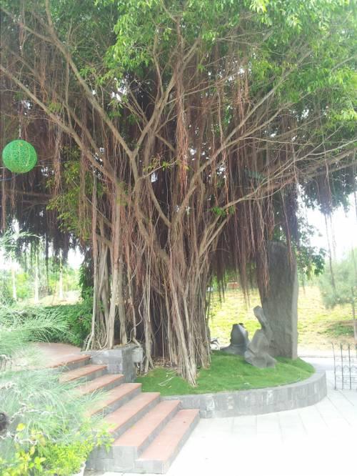 Популярный курорт Нячанг эко-парк Янг Бей